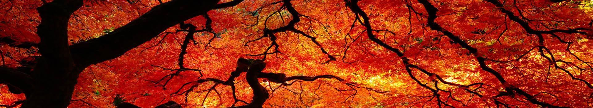 Tree_1_RS_1